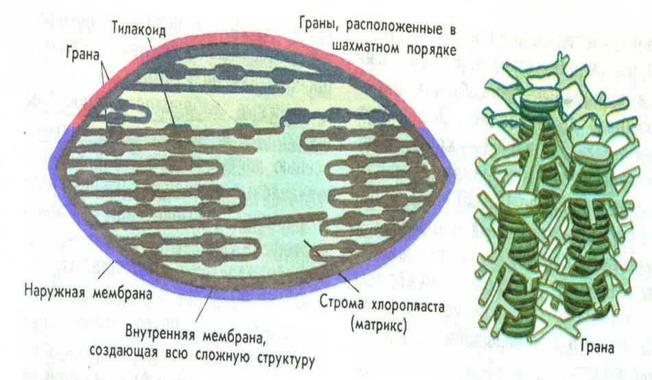 Схема «Хлоропласт»