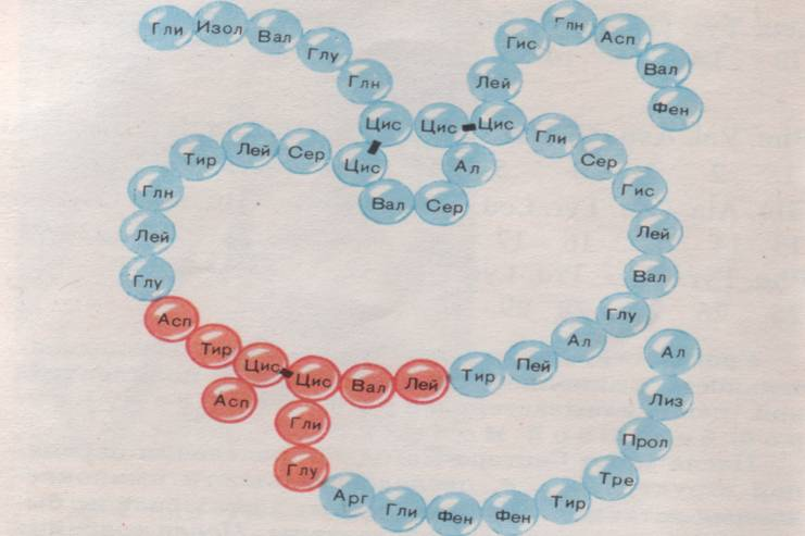 Схема «Образование дипептида»