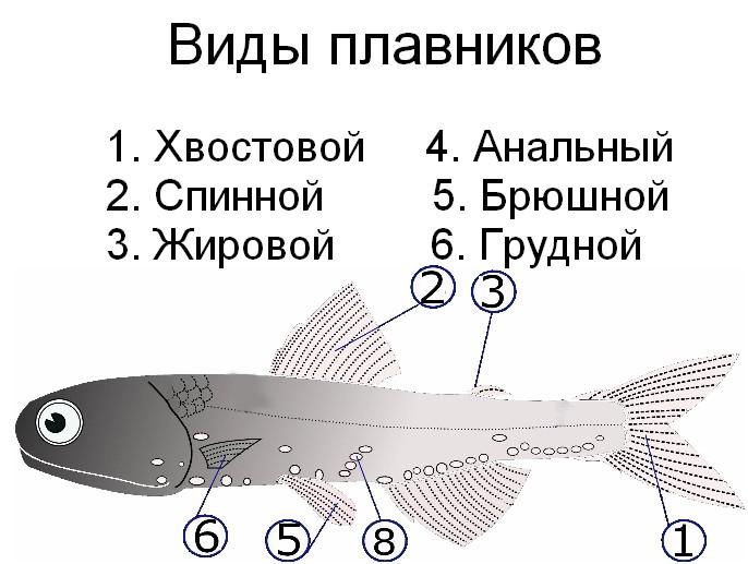 Схема «Инфузория-туфелька»